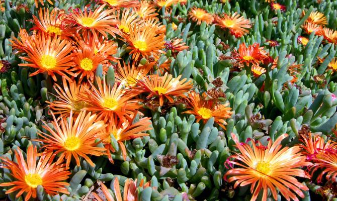 Le piante grasse giocano da protagoniste for Piante sempreverdi con fiori