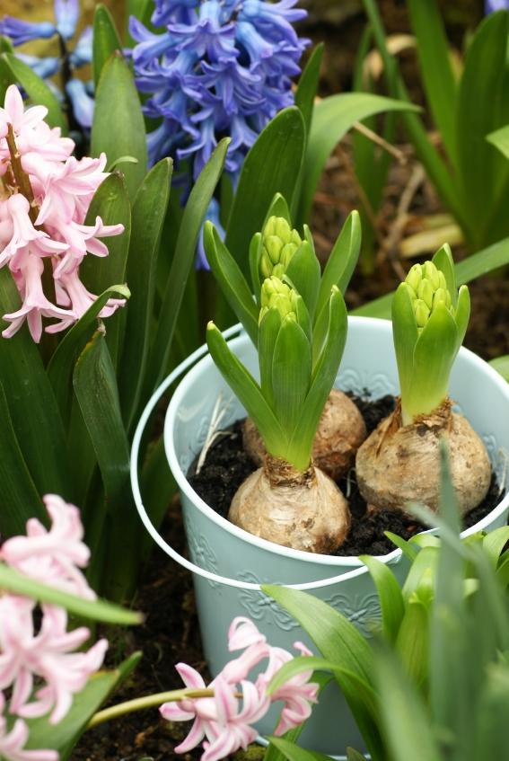 Bulbi invernali una tenera idea regalo for Piante da bulbo