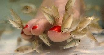 Pedicure con i pesci