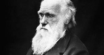 Tutto Darwin