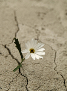 Spunta un fiore nel deserto