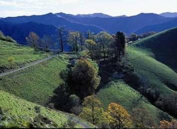 Ticino. Una montagna di gusto