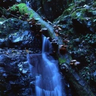 La valle del biologico in Liguria