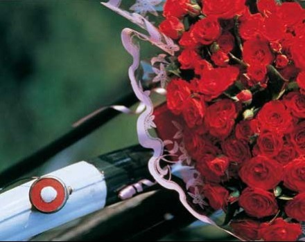 Olanda tulipani e bicicletta