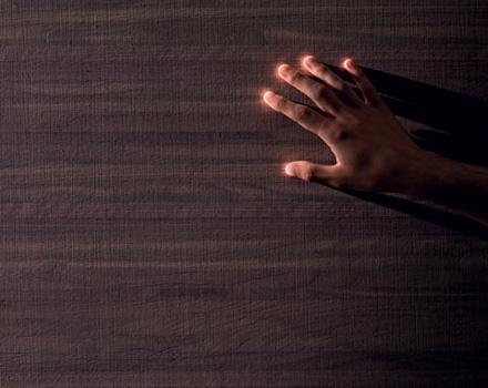 Il legno, materia viva