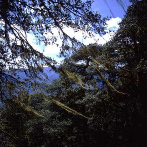 Bhutan foreste