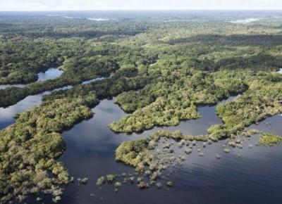 Brasile foresta amazzonica