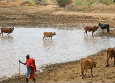 Kenya eco-solidale