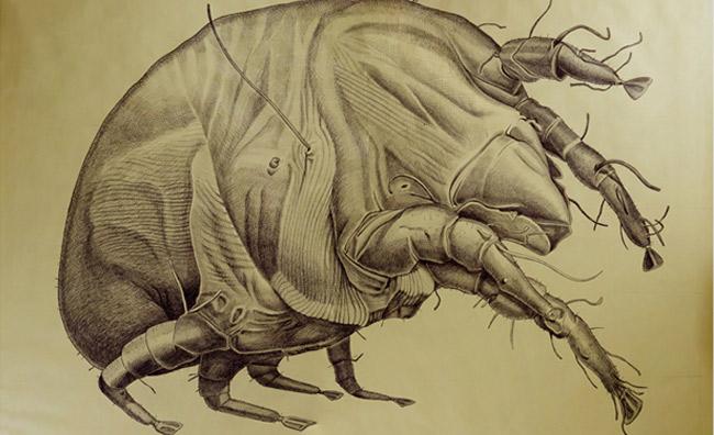 Carrà e la breve vita degli insetti