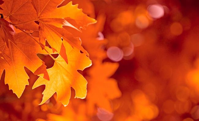Per il design, l'autunno è di casa