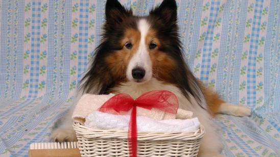 Vacanze da cani: ci vuole una Spa!