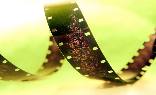 Cinema ed ecologia insieme per un festival green
