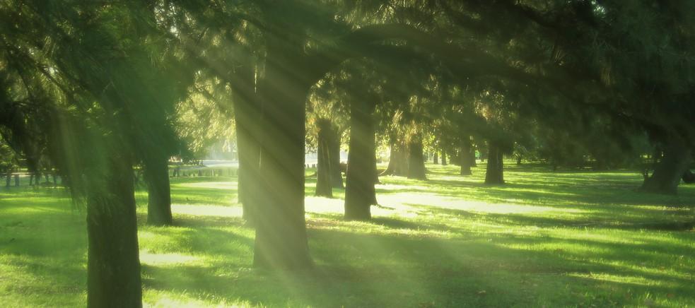 Nei boschi del parmense tra arte e natura