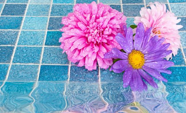 Fiori rosa e viola