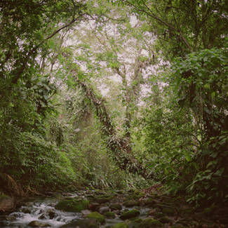 Mona Kuhn, Virgin Forest foresta