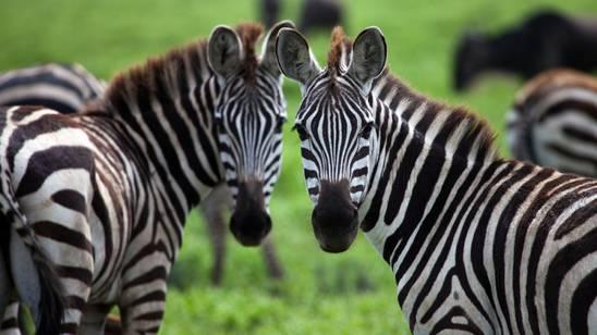 Tanzania, la grande natura africana