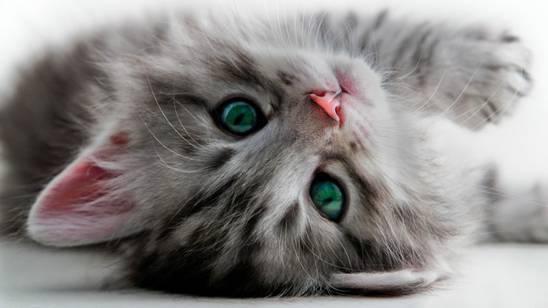 Viaggiare con il gatto: è bene sapere che…