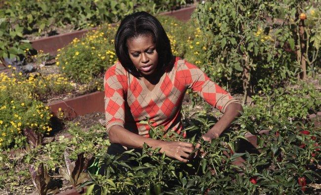 Michelle premiata con un ulivo millenario