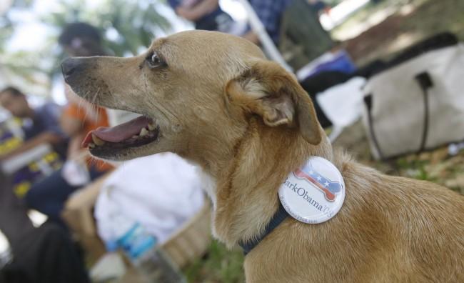 Bark for Obama, anche le quattro zampe diventano protagoniste