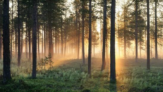 Estate svedese con il sole di mezzanotte