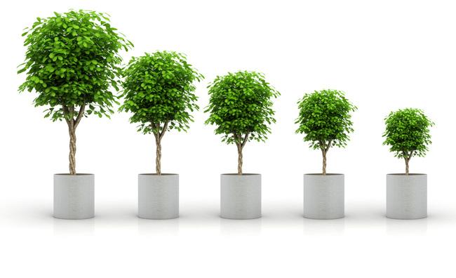 Ci vorrebbe un plant-sitter!