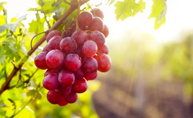 Più giovani con la vinoterapia