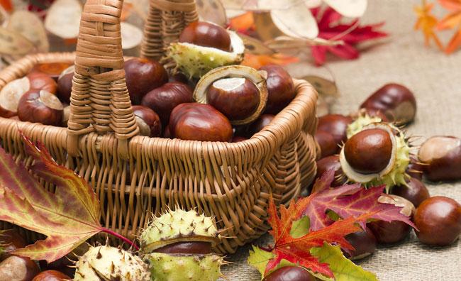 Sapori di autunno: di castagna in castagna
