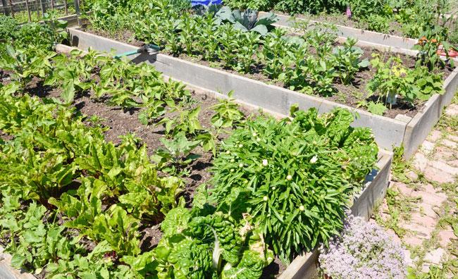 Community gardens, una passione newyorkese