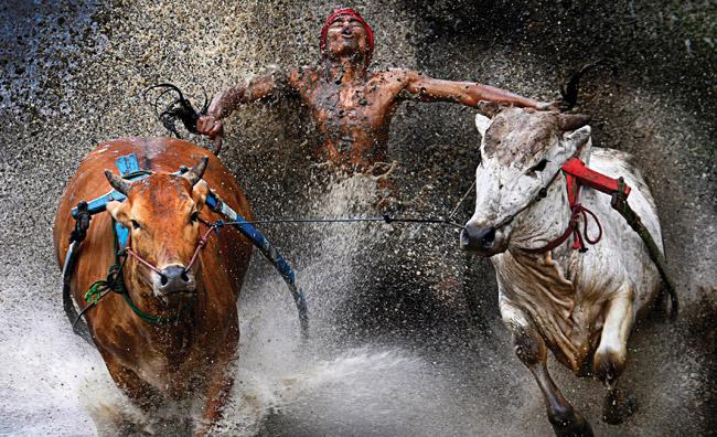 World Press Photo: le immagini premiate a Roma