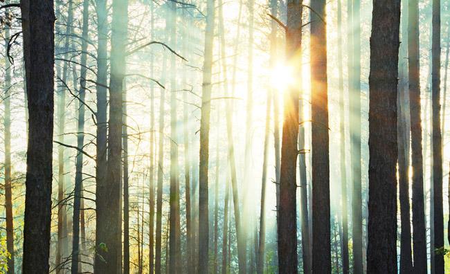 Il bosco entra in casa, e porta la luce
