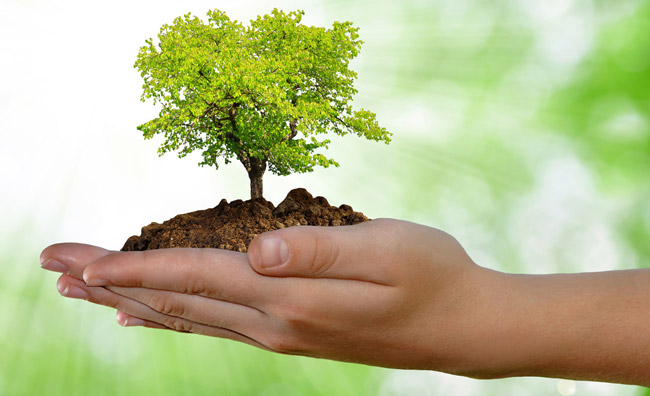 Oggi è la giornata dell'ambiente