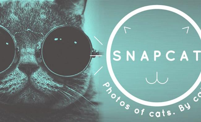 Vanità felina: gli autoscatti dei gatti