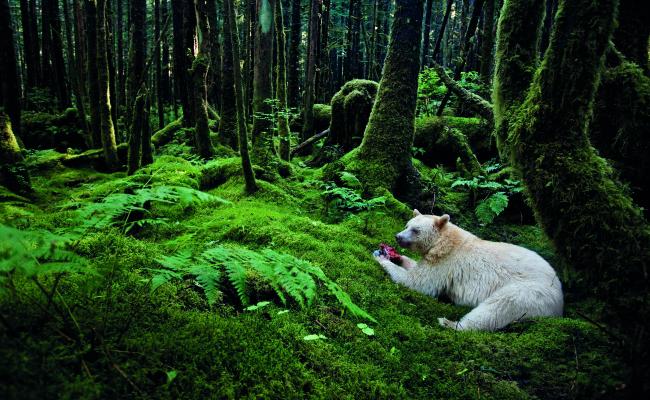 """National Geographic festeggia con """"La Grande Avventura"""""""