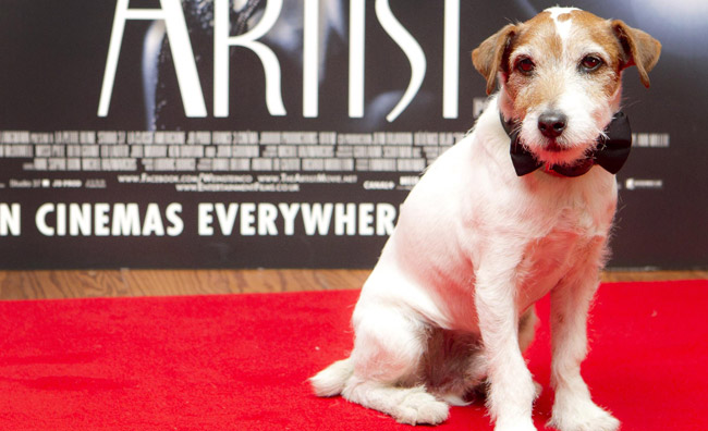 Hollywood Dogs, attori a quattro zampe
