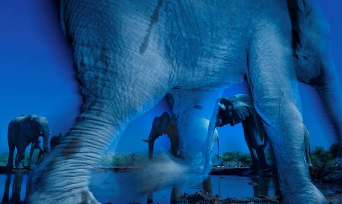 Wildlife Photographer of the Year: i vincitori