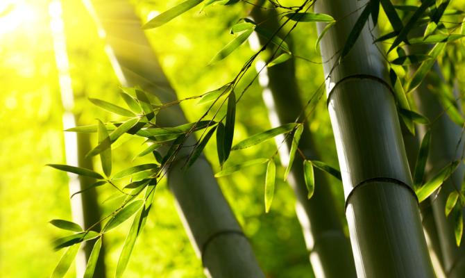 Bambù: il futuro dell'edilizia?