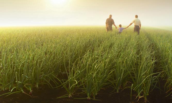 prato, campo, persone, tramonto