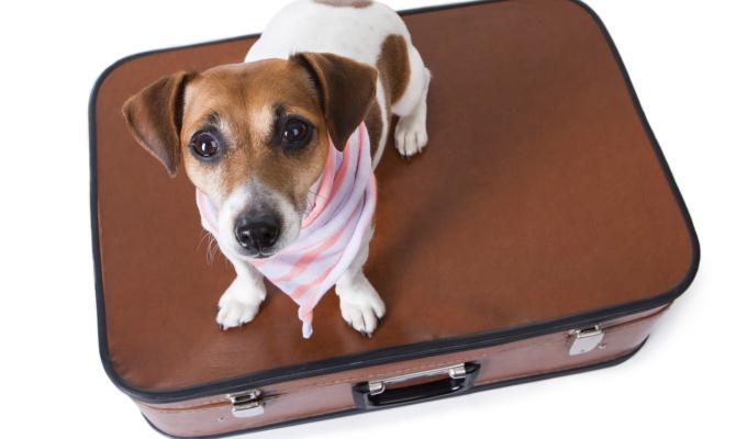 Tripadvisor per cinofili? Arriva Trip For Dog