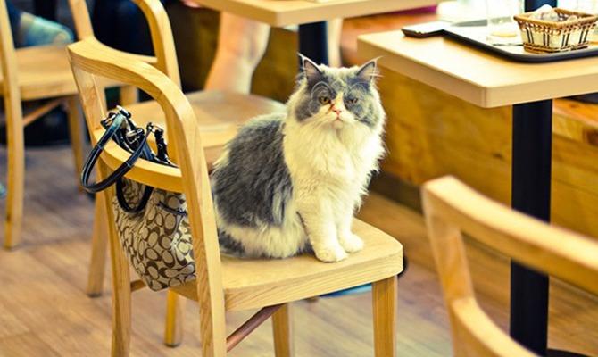 Aperitivo col gatto: arriva il primo Cat Café italiano