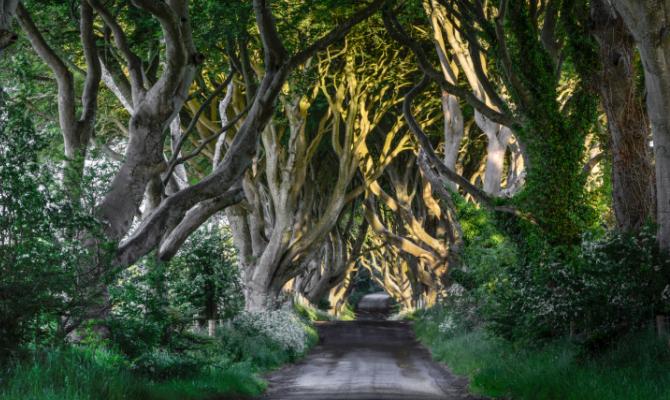 Il sentiero più fantasy del mondo, The Dark Hedges