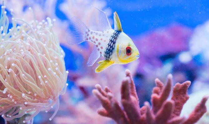 Alla scoperta della vita sottomarina anche in inverno