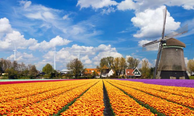 Il profumo dell'Olanda in fiore