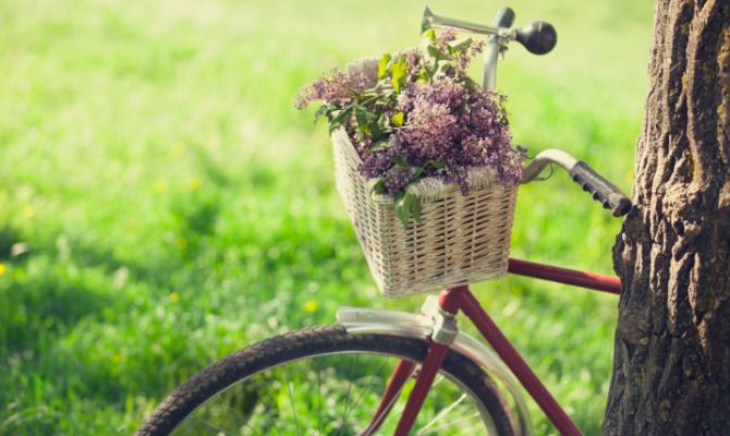 Cestino della bici