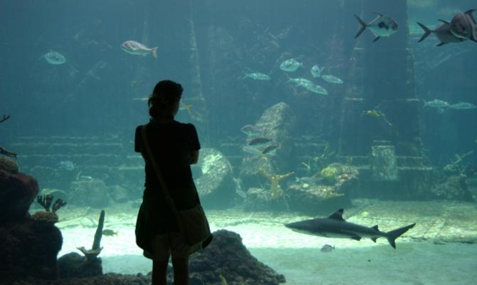 Un underwater suite
