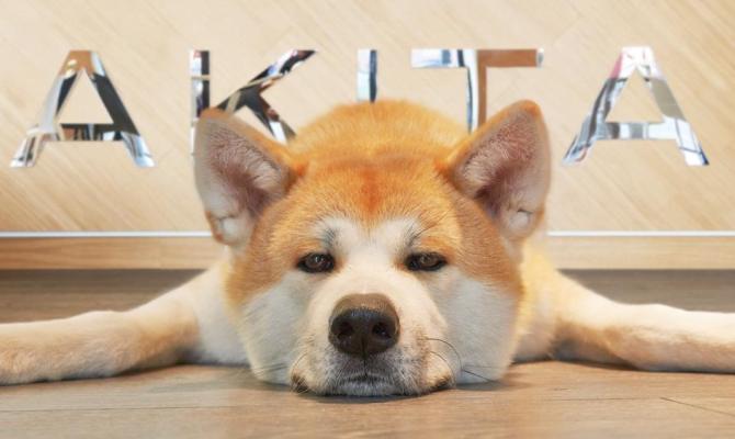 Bar per cani Akita