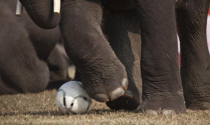 Nelly, l'elefante-oracolo del Mondiale brasiliano