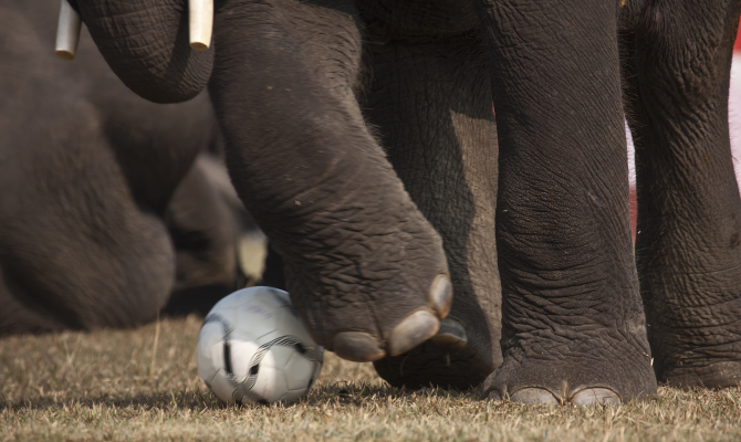 Elefante gioca a pallone