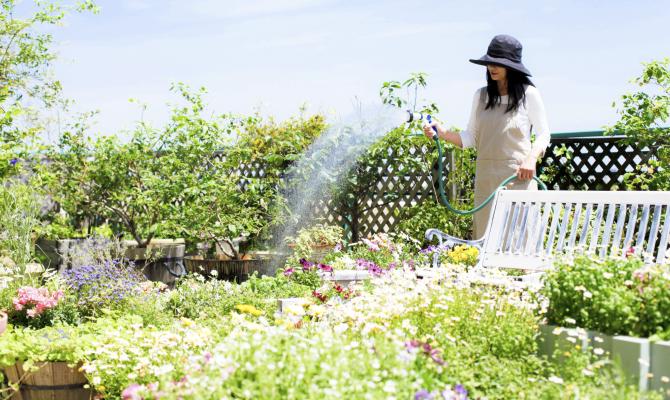 Plantsitter: arriva la tata delle piante