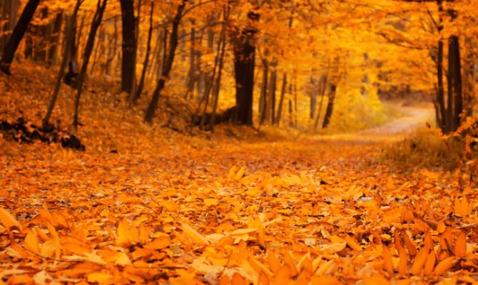 Foliage: 5 mete per amare l'autunno