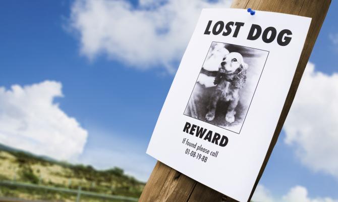 Annuncio smarrimento cane
